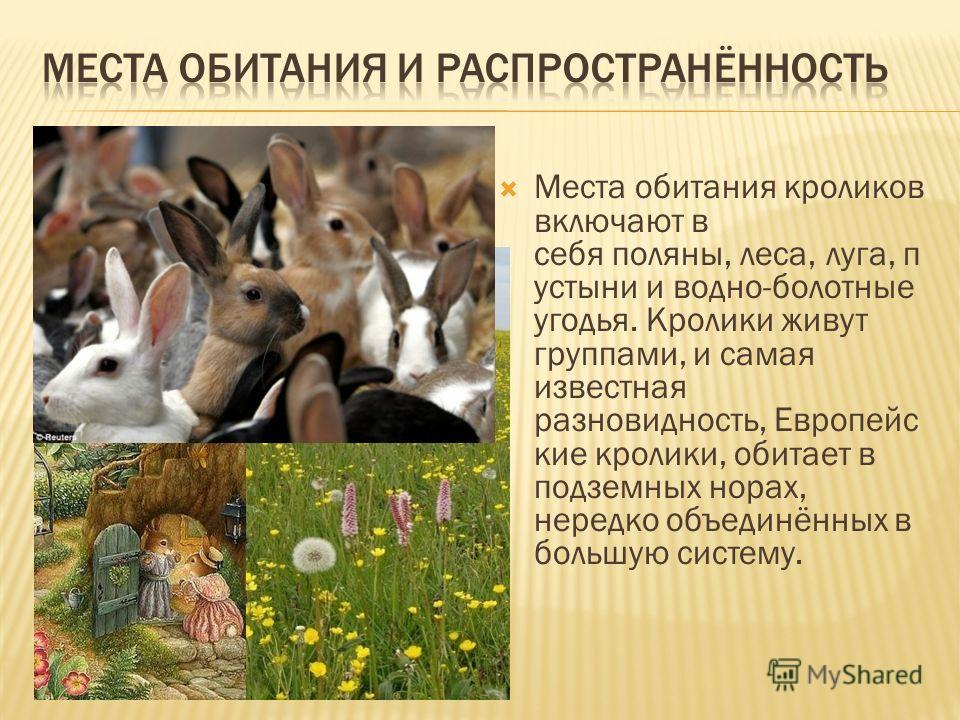 Места обитания кроликов включают в себя поляны, леса, луга, п устыни и водно-болотные угодья. Кролики живут группами, и самая известная разновидность, Европейс кие кролики, обитает в подземных норах, нередко объединённых в большую систему.