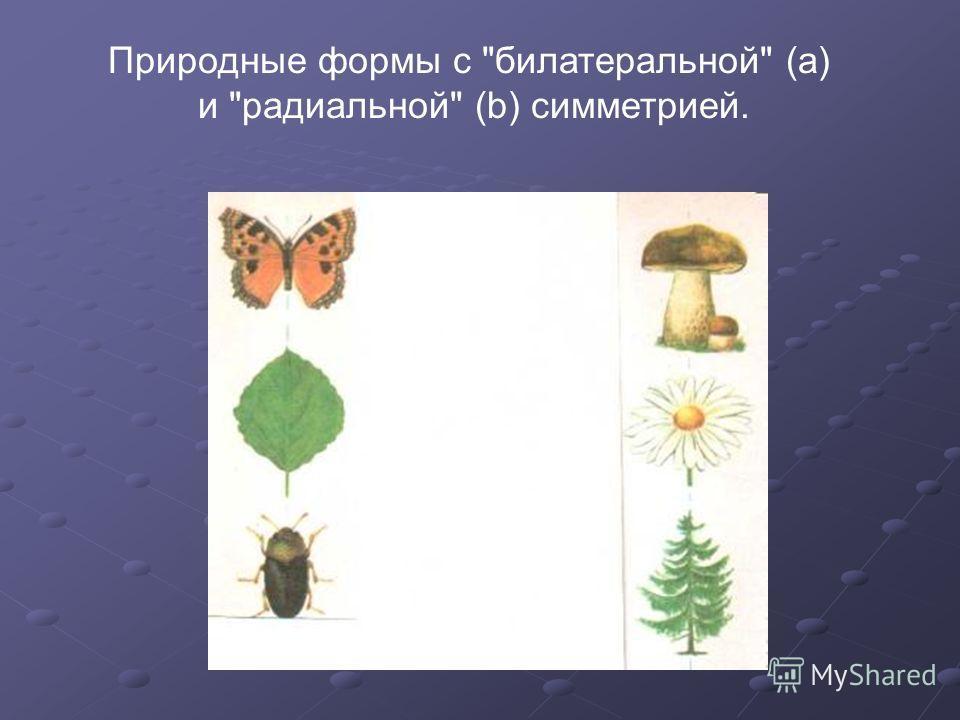 Природные формы с билатеральной (а) и радиальной (b) симметрией.