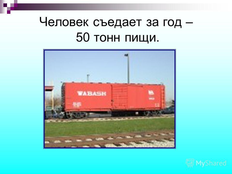 Человек съедает за год – 50 тонн пищи.