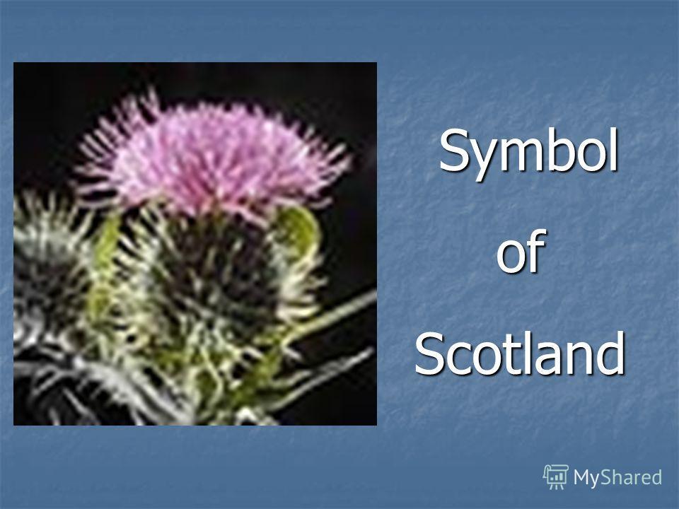 Symbol SymbolofScotland