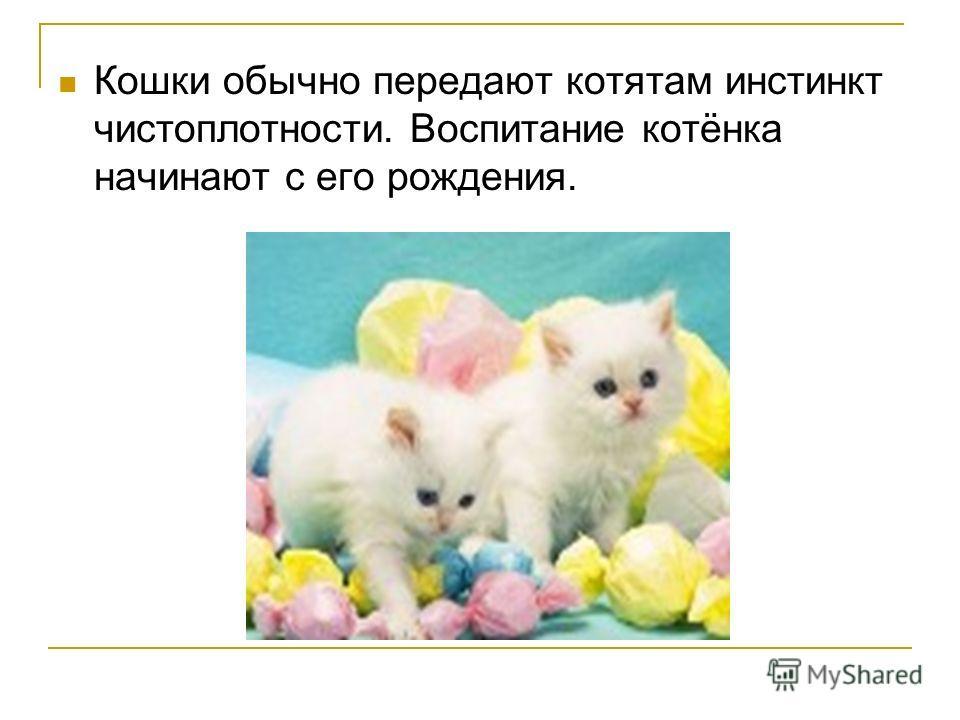 Кошки обычно передают котятам инстинкт чистоплотности. Воспитание котёнка начинают с его рождения.