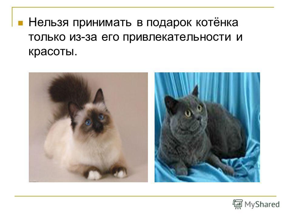Нельзя принимать в подарок котёнка только из-за его привлекательности и красоты.