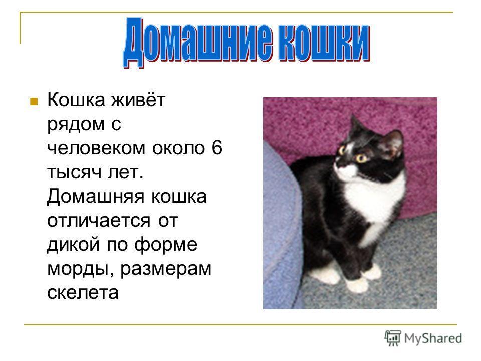 Кошка живёт рядом с человеком около 6 тысяч лет. Домашняя кошка отличается от дикой по форме морды, размерам скелета