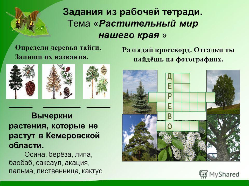 Задания из рабочей тетради. Тема «Растительный мир нашего края » Определи деревья тайги. Запиши их названия. _______ ___________ _______ Разгадай кроссворд. Отгадки ты найдёшь на фотографиях. Вычеркни растения, которые не растут в Кемеровской области