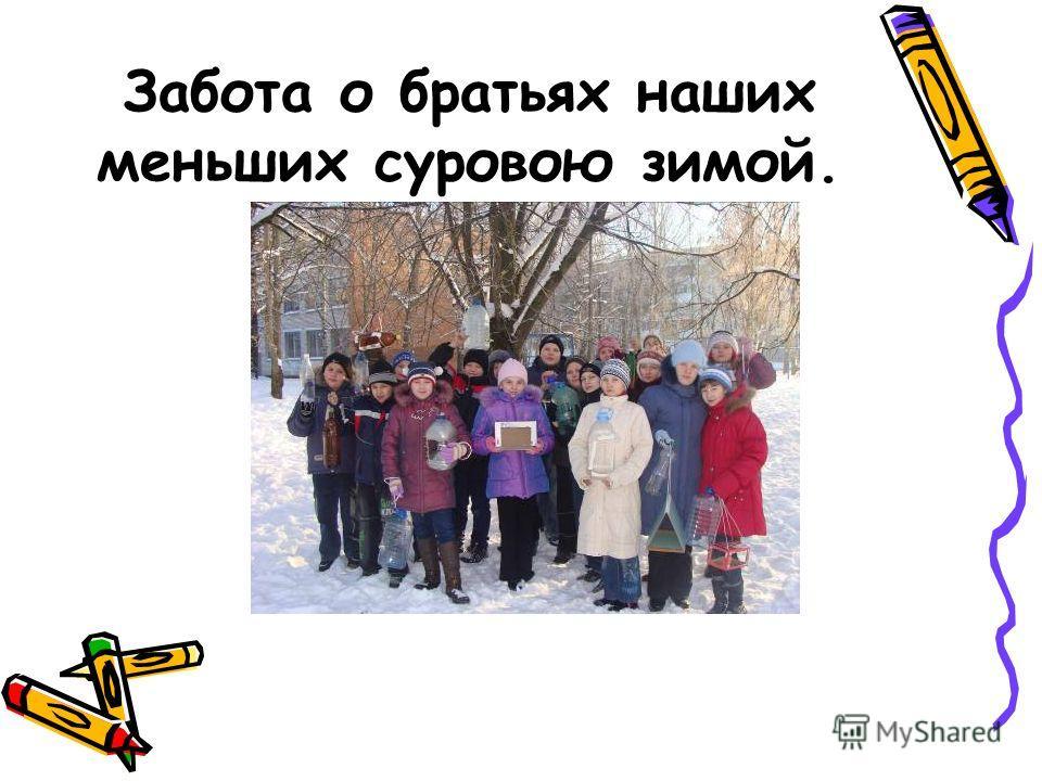 Забота о братьях наших меньших суровою зимой.