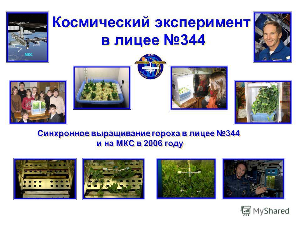 Космический эксперимент в лицее 344 Космический эксперимент в лицее 344 Синхронное выращивание гороха в лицее 344 и на МКС в 2006 году Синхронное выращивание гороха в лицее 344 и на МКС в 2006 году