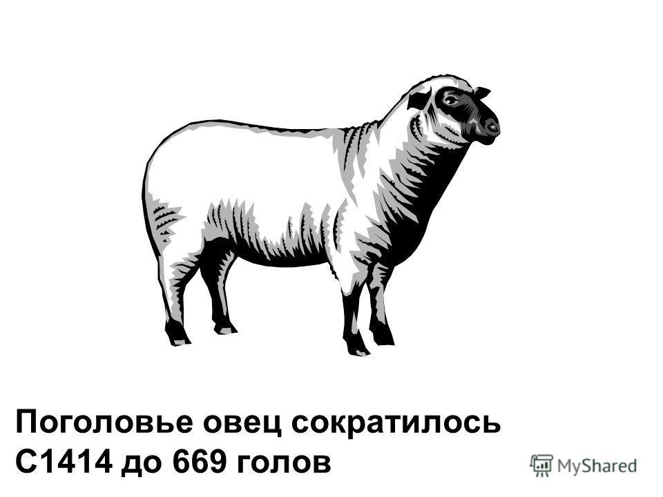 Поголовье овец сократилось С1414 до 669 голов