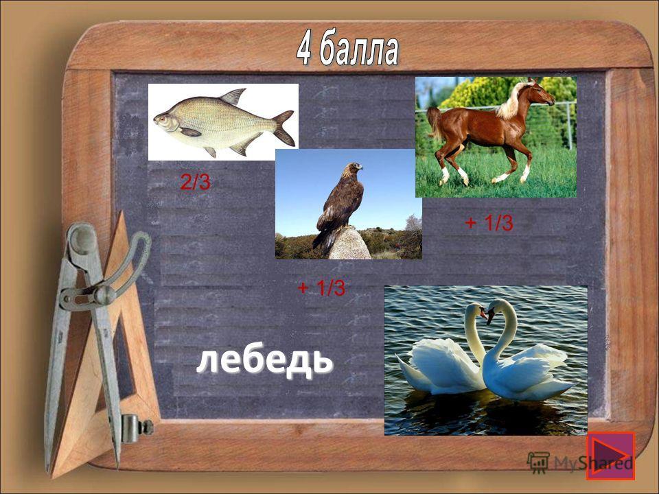 Составьте название птицы, в которое входят части изображенных здесь представителей зоологического мира 2/3 + 1/3