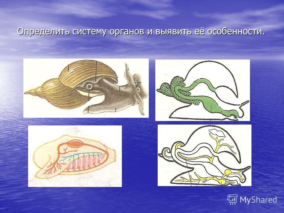 Определить систему органов и выявить её особенности.