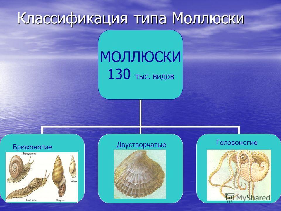 Классификация типа Моллюски МОЛЛЮСКИ 130 тыс. видов Брюхоногие Двустворчатые Головоногие