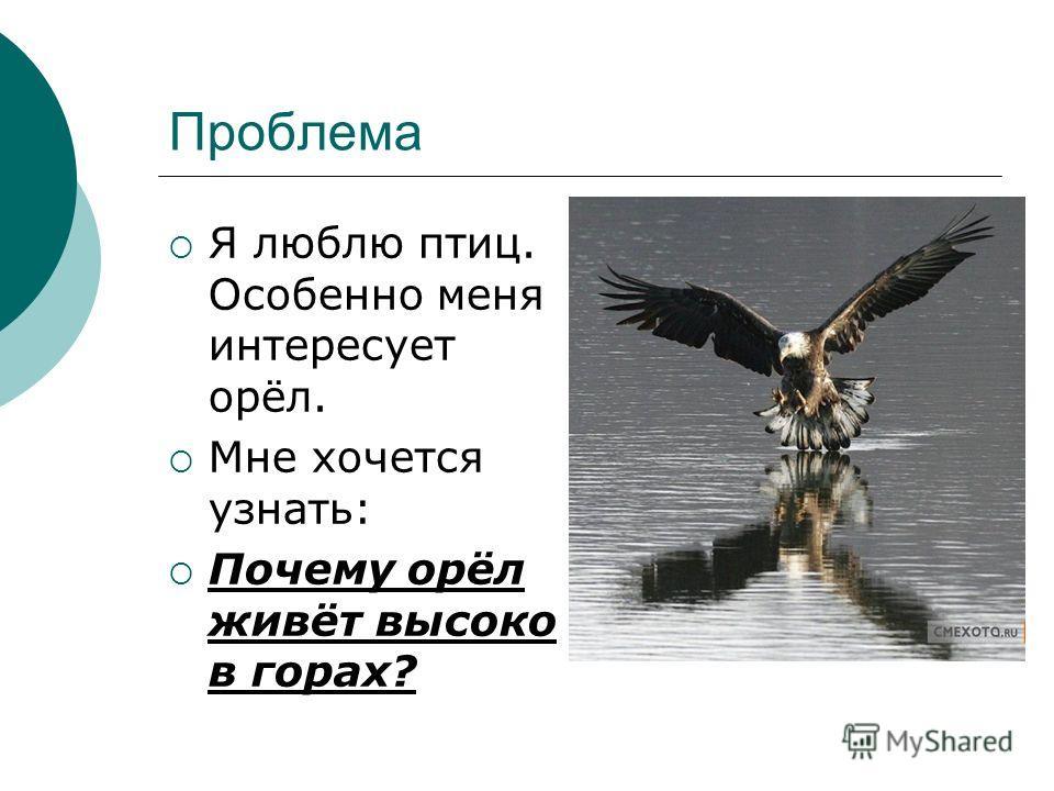 Проблема Я люблю птиц. Особенно меня интересует орёл. Мне хочется узнать: Почему орёл живёт высоко в горах?