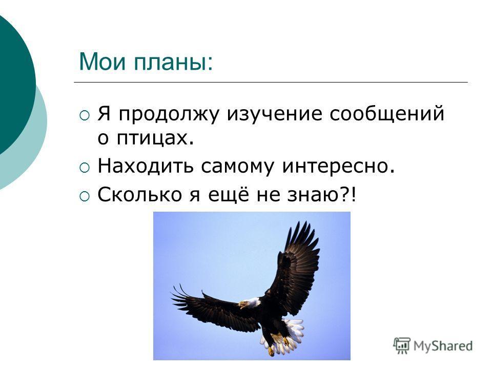 Мои планы: Я продолжу изучение сообщений о птицах. Находить самому интересно. Сколько я ещё не знаю?!