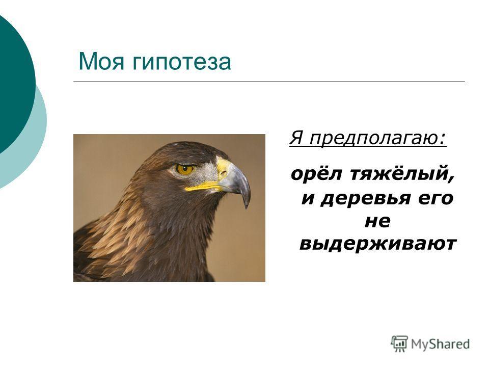Моя гипотеза Я предполагаю: орёл тяжёлый, и деревья его не выдерживают