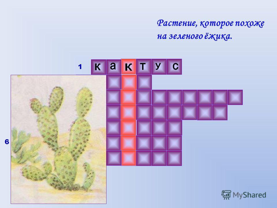 Растение, которое похоже на зеленого ёжика. 1 2 3 4 5 6 7 6