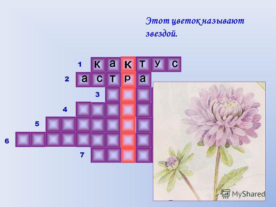 Этот цветок называют звездой. 1 2 3 4 5 6 7 6