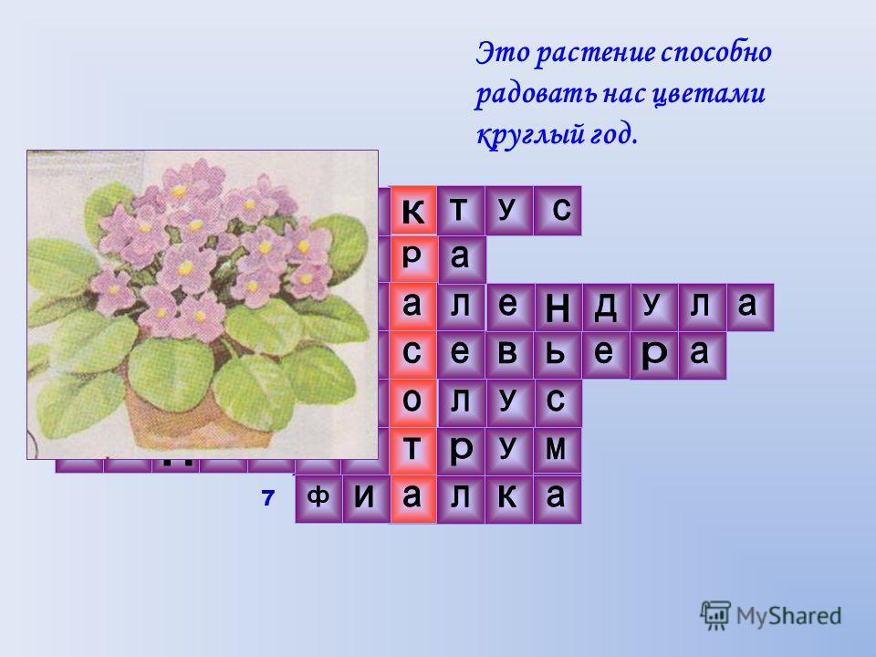 Это растение способно радовать нас цветами круглый год. 1 2 3 4 5 6 7 6