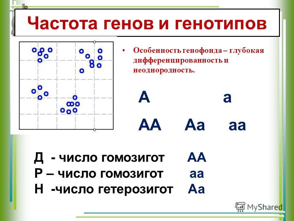 Частота генов и генотипов Особенность генофонда – глубокая дифференцированность и неоднородность. АА Аа аа А а Д - число гомозигот АА Р – число гомозигот аа Н -число гетерозигот Аа