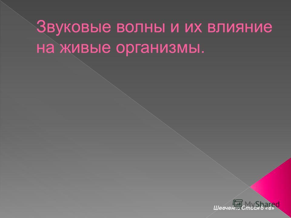 Шевченко Стася 8 «в»