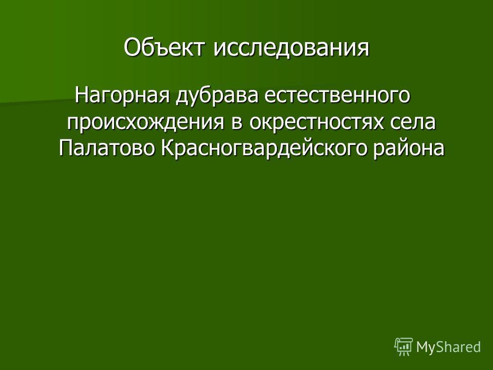 Объект исследования Нагорная дубрава естественного происхождения в окрестностях села Палатово Красногвардейского района