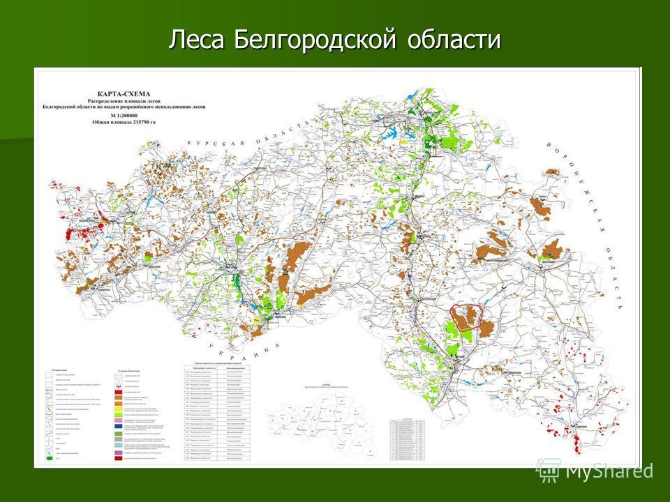 Леса Белгородской области