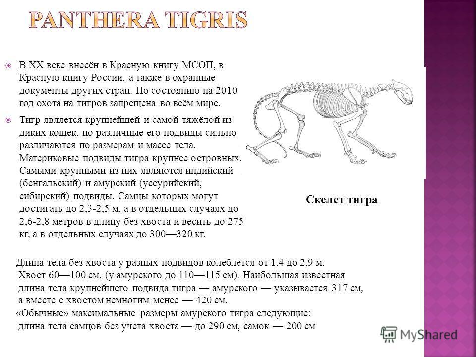 В XX веке внесён в Красную книгу МСОП, в Красную книгу России, а также в охранные документы других стран. По состоянию на 2010 год охота на тигров запрещена во всём мире. Тигр является крупнейшей и самой тяжёлой из диких кошек, но различные его подви