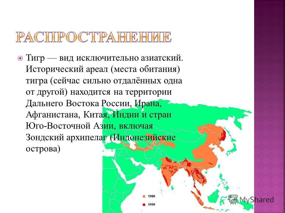 Тигр вид исключительно азиатский. Исторический ареал (места обитания) тигра (сейчас сильно отдалённых одна от другой) находится на территории Дальнего Востока России, Ирана, Афганистана, Китая, Индии и стран Юго-Восточной Азии, включая Зондский архип