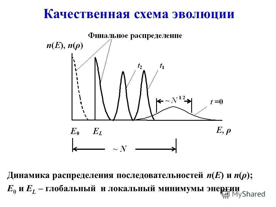 Качественная схема эволюции Динамика распределения последовательностей n(E) и n(ρ); E 0 и E L – глобальный и локальный минимумы энергии