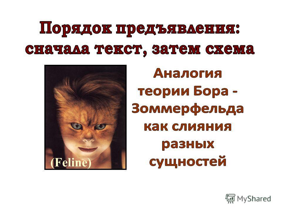 (Feline)