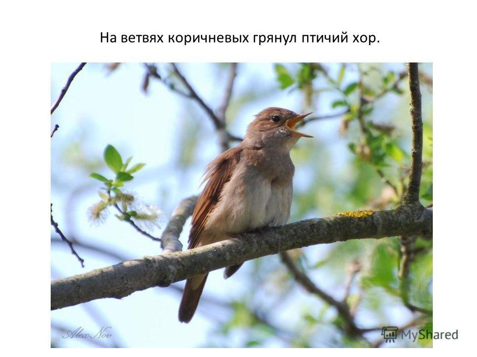 На ветвях коричневых грянул птичий хор.