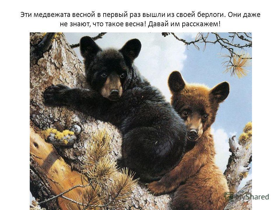 Эти медвежата весной в первый раз вышли из своей берлоги. Они даже не знают, что такое весна! Давай им расскажем!