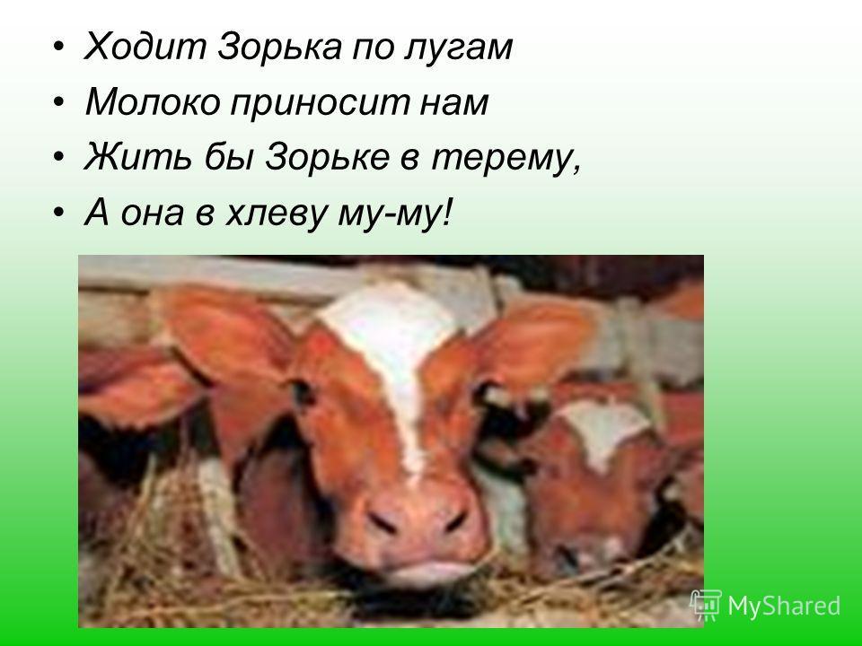 Ходит Зорька по лугам Молоко приносит нам Жить бы Зорьке в терему, А она в хлеву му-му!