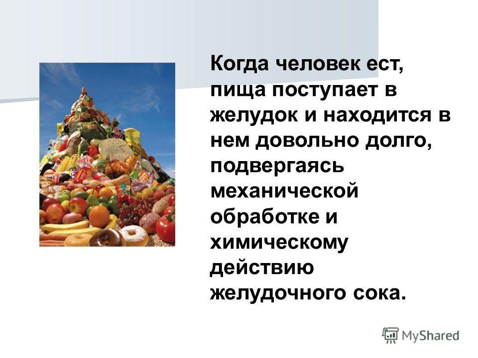 Когда человек ест, пища поступает в желудок и находится в нем довольно долго, подвергаясь механической обработке и химическому действию желудочного сока.