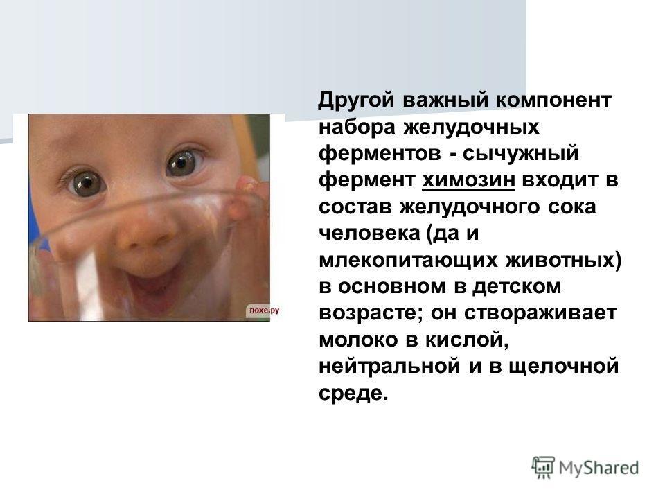 Другой важный компонент набора желудочных ферментов - сычужный фермент химозин входит в состав желудочного сока человека (да и млекопитающих животных) в основном в детском возрасте; он створаживает молоко в кислой, нейтральной и в щелочной среде.