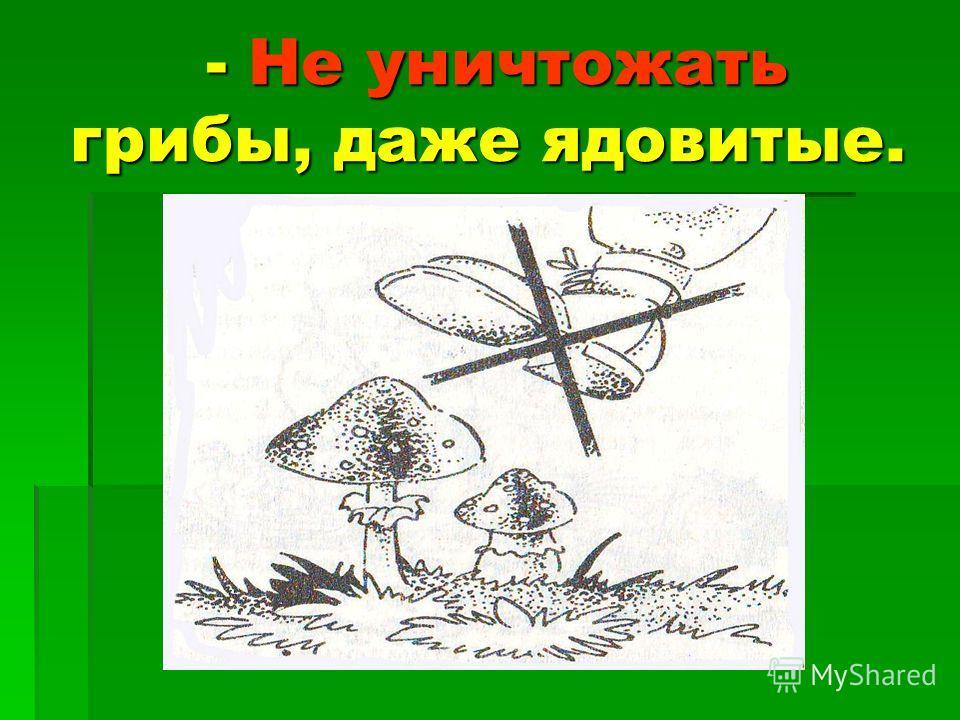 - Не уничтожать грибы, даже ядовитые. - Не уничтожать грибы, даже ядовитые.