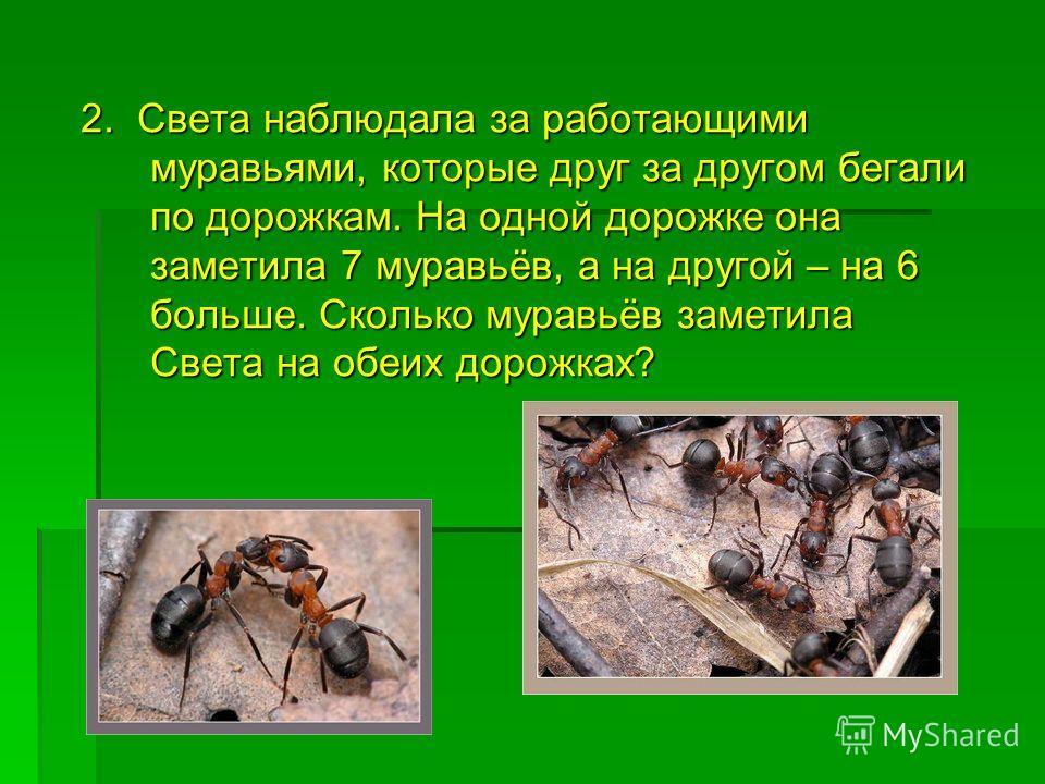2. Света наблюдала за работающими муравьями, которые друг за другом бегали по дорожкам. На одной дорожке она заметила 7 муравьёв, а на другой – на 6 больше. Сколько муравьёв заметила Света на обеих дорожках?