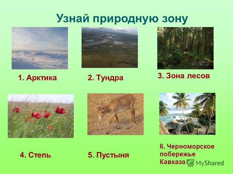 Узнай природную зону 1. Арктика2. Тундра 3. Зона лесов 4. Степь5. Пустыня 6. Черноморское побережье Кавказа