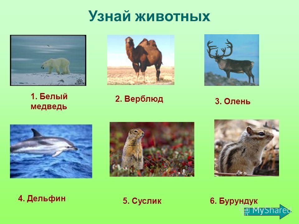 Узнай животных 1. Белый медведь 2. Верблюд 3. Олень 4. Дельфин 5. Суслик6. Бурундук