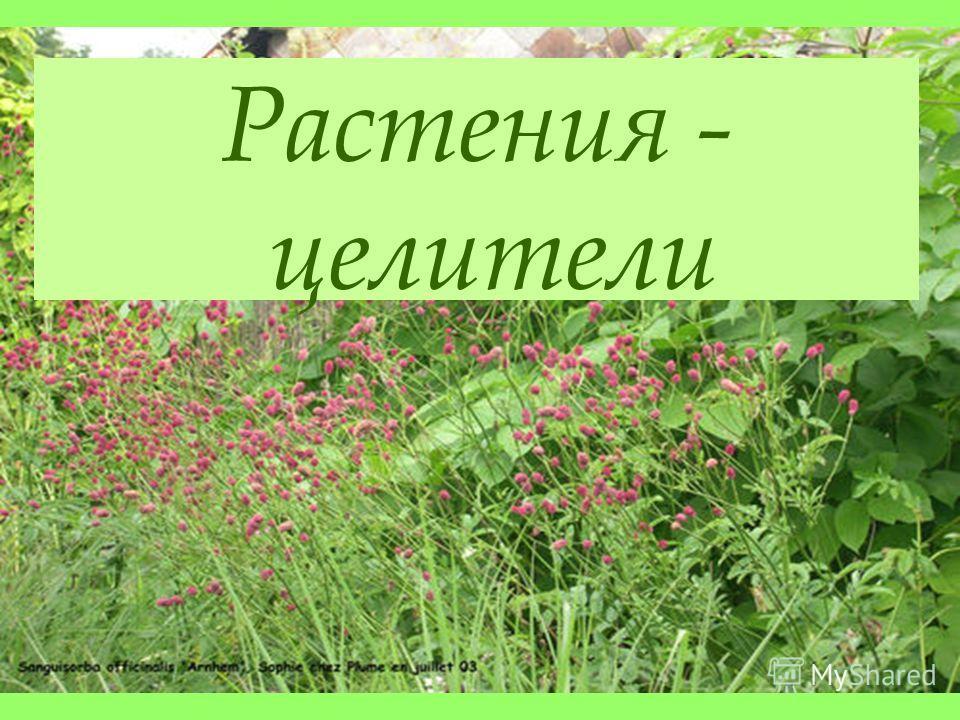 Растения - целители