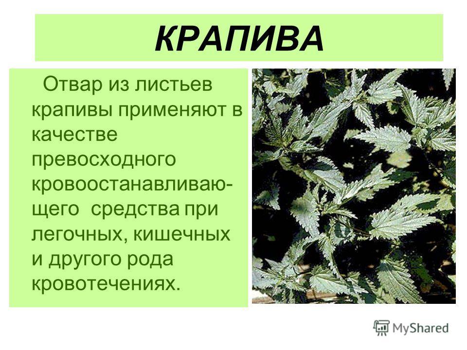первые признаки паразитов в организме