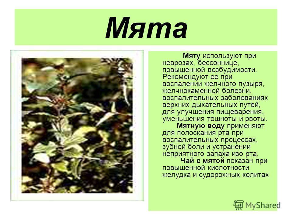 Мята Мяту используют при неврозах, бессоннице, повышенной возбудимости. Рекомендуют ее при воспалении желчного пузыря, желчнокаменной болезни, воспалительных заболеваниях верхних дыхательных путей, для улучшения пищеварения, уменьшения тошноты и рвот