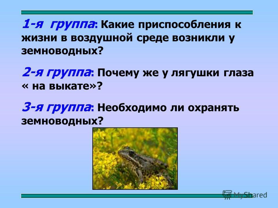 1-я группа : Какие приспособления к жизни в воздушной среде возникли у земноводных? 2-я группа : Почему же у лягушки глаза « на выкате»? 3-я группа : Необходимо ли охранять земноводных?