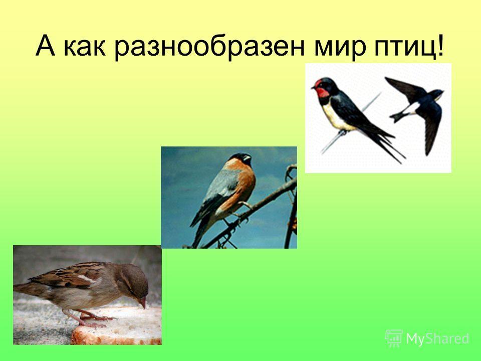 А как разнообразен мир птиц!