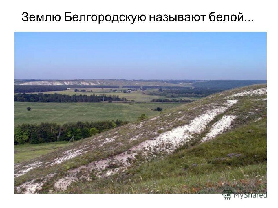 Землю Белгородскую называют белой...