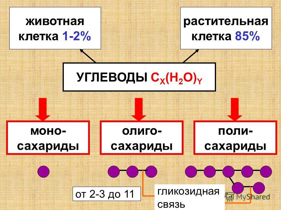 УГЛЕВОДЫ C X (H 2 O) Y животная клетка 1-2% растительная клетка 85% моно- сахариды олиго- сахариды поли- сахариды гликозидная связь от 2-3 до 11