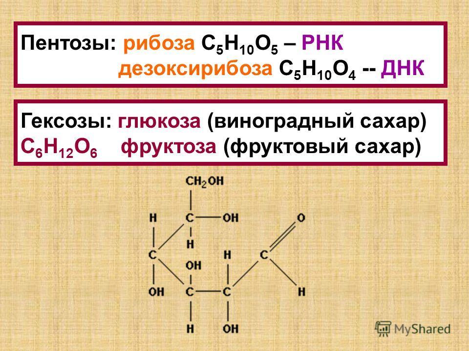 Пентозы: рибоза С 5 Н 10 О 5 – РНК дезоксирибоза С 5 Н 10 О 4 -- ДНК Гексозы: глюкоза (виноградный сахар) С 6 Н 12 О 6 фруктоза (фруктовый сахар)