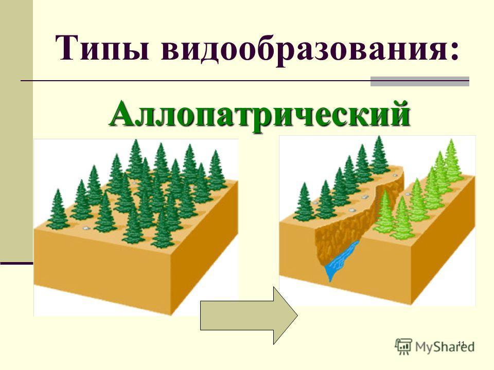 Типы видообразования Типы видообразования Аллопатрическое или географическое видообразование. Оно основано на пространственной изоляции ( вьюрки на Галапагосских островах, возникновение трех видов ландышей, отсутствие на Мадагаскаре крупных копытных