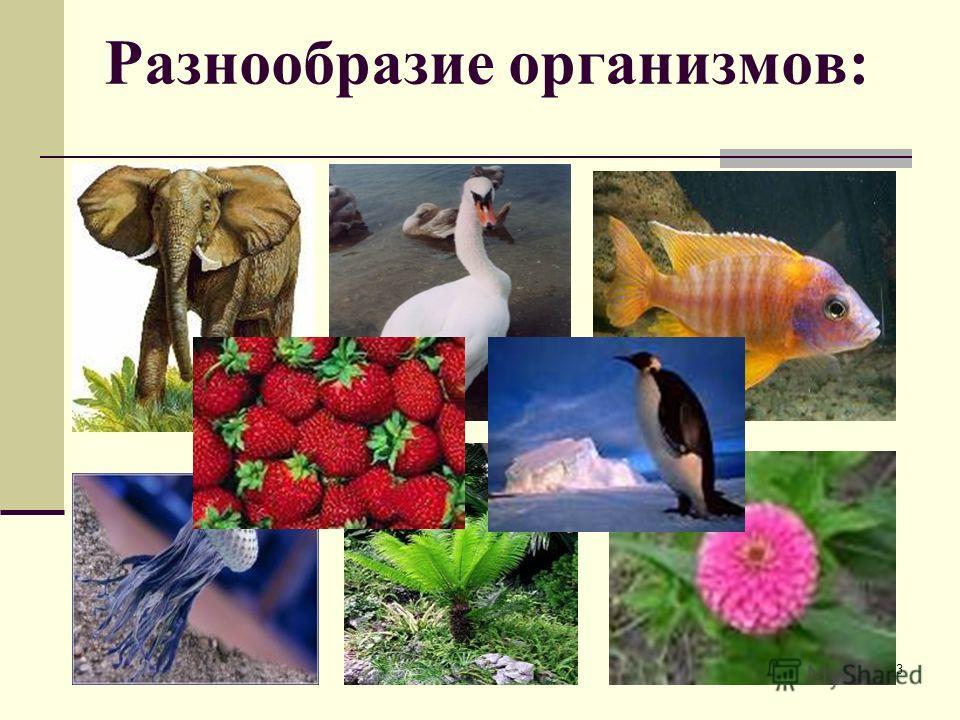 2 Закрепить знания об эволюционных процессах. Дать понятия о путях и скорости видообразования. Определить типы видообразования. Цель урока: