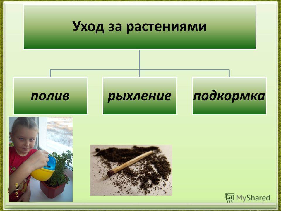 7 Уход за растениями поливрыхлениеподкормка
