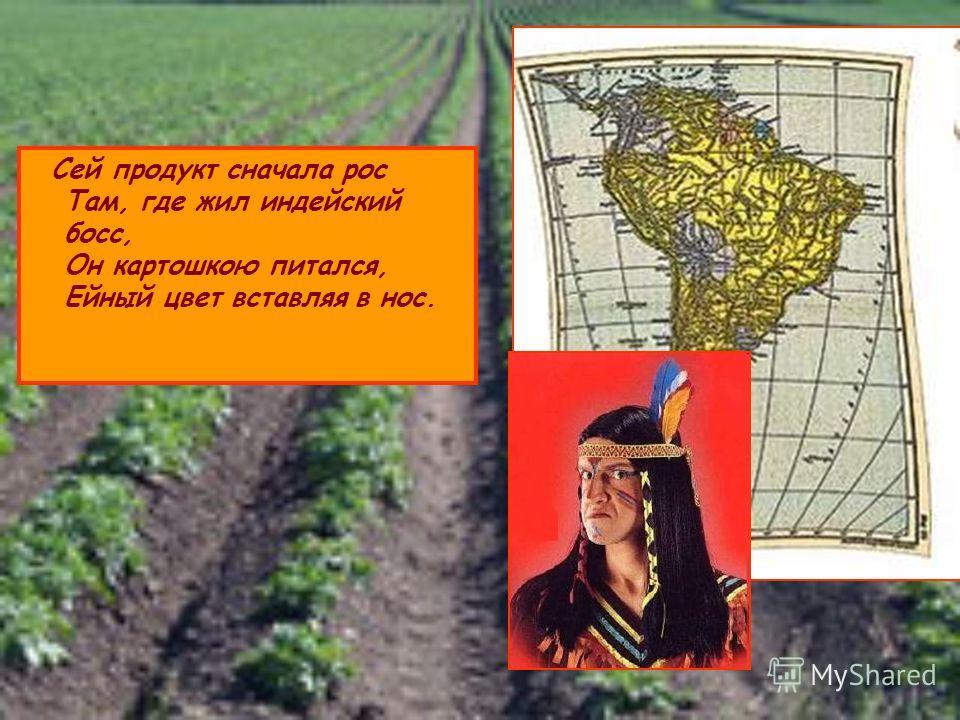 Сей продукт сначала рос Там, где жил индейский босс, Он картошкою питался, Ейный цвет вставляя в нос.