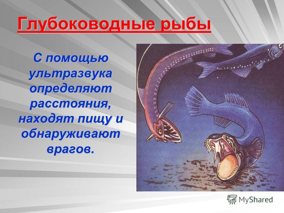 Глубоководные рыбы С помощью ультразвука определяют расстояния, находят пищу и обнаруживают врагов.